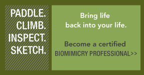 Biomimicry Professional Certification Program