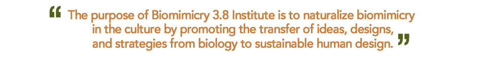 Biomimicry 3.8 Institute Mission Statement