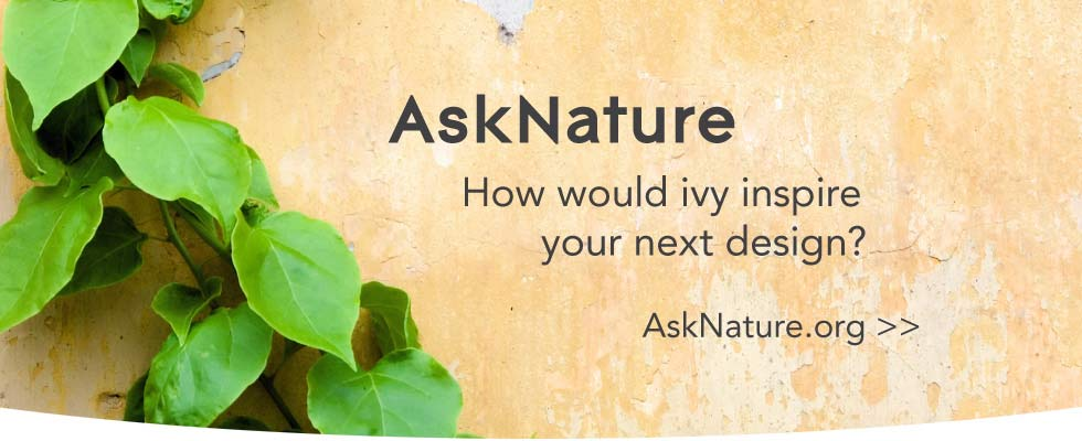 asknature