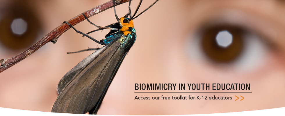 Biomimicry in Youth Education Toolkit