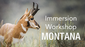 Immersion_Workshop_Montana_Newsroom_Thumbnail